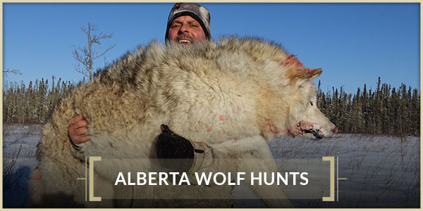 Interlake Safaris Hunts from the Heart Alberta Wolf Hunts