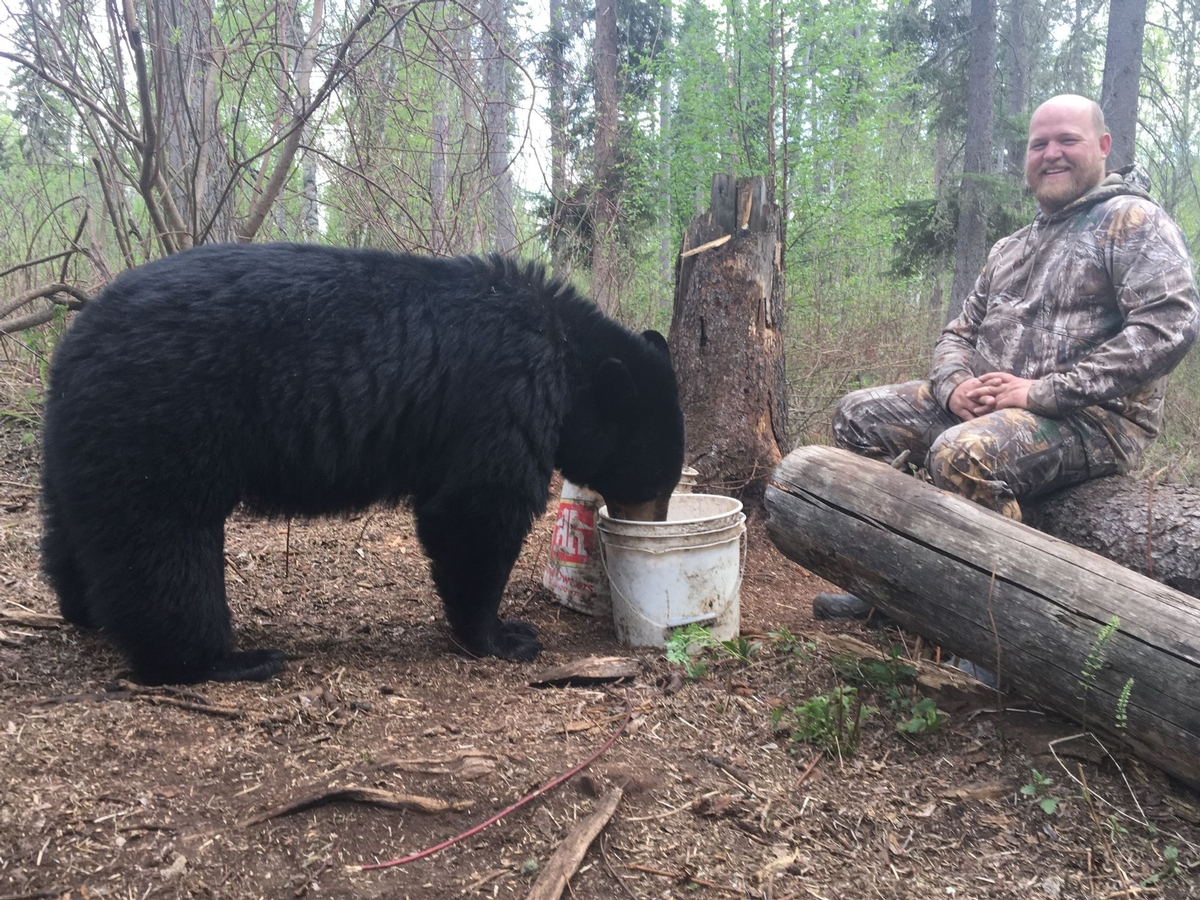 Alberta Black Bear Hunting Adventures (3)